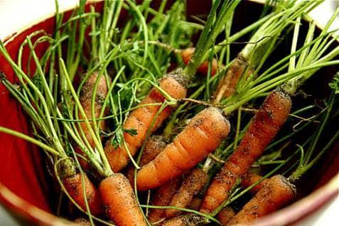 Baby Organic Carrots Garden