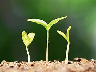 green shoots growing - how to grow