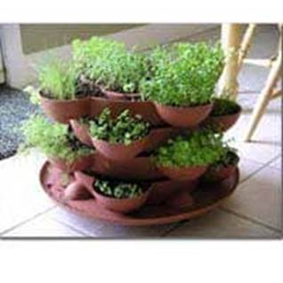 Indoor Culinary Herb Garden