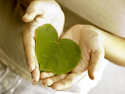 Woman's hands holding heart-shaped leaf