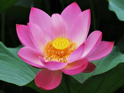 Lotus, Yoga, Christian Yoga