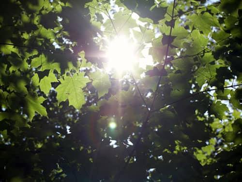 Sunlight filtered through leaves