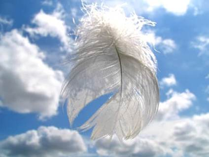 White feather against blue sky