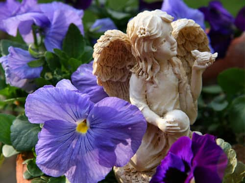 Angel statue and pansies