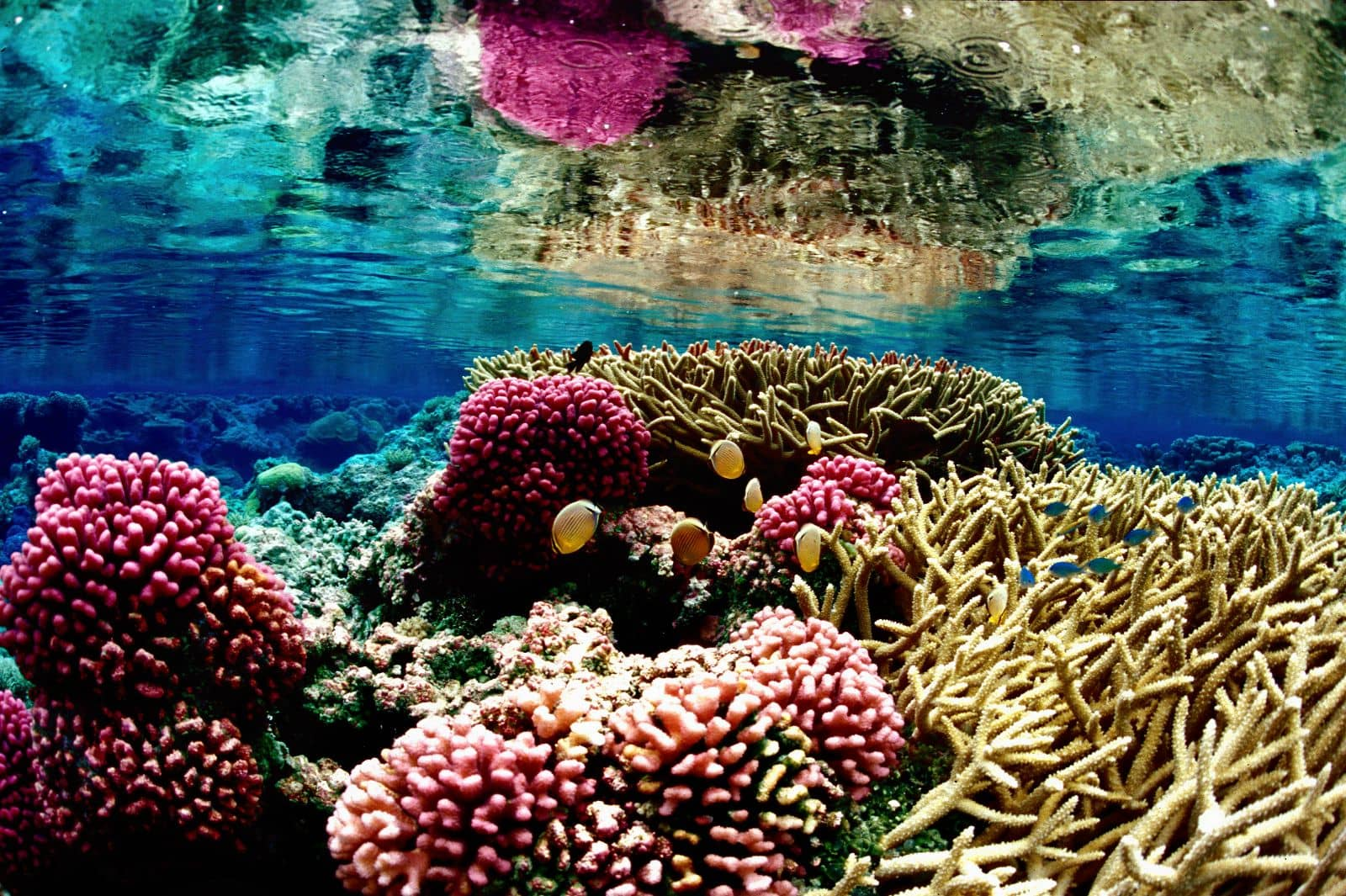 great barrier reef, australia, 20 Most Beautiful Places