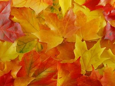Inspiring quotes about autumn beliefnet fall has arrived behold the changing leaves and bursts of color enjoy these inspirational fall quotes autumn quotes and spectacular fall foliage photos m4hsunfo