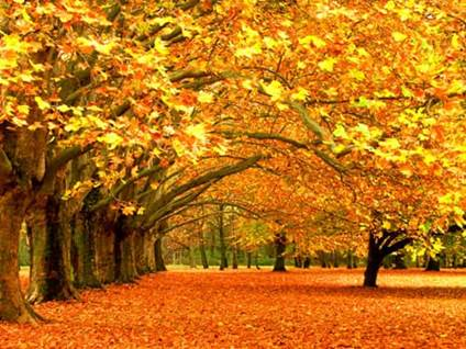 fall love how to enjoy the fall season the first day of fall the