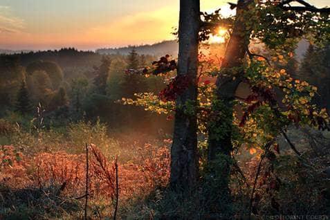 fall dark woods