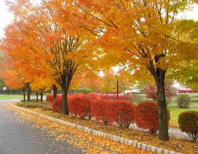 fall leaves on street