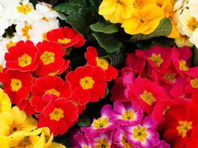 Inspirational flowers quotes beliefnet colorful spring flowers mightylinksfo
