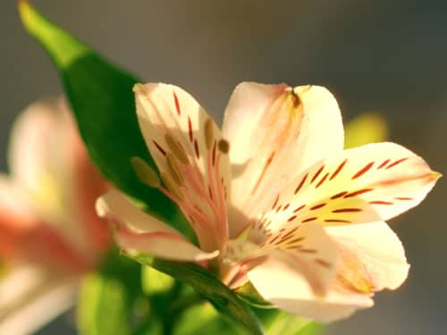Pale yellow and pink flowers