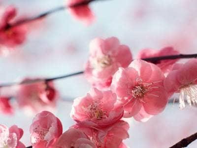 Inspirational Flowers Quotes Flowers Of Tomorrow Beliefnet