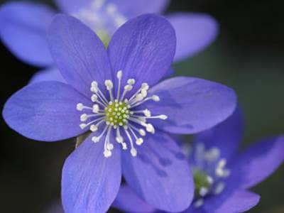 Inspirational Flowers Quotes Where Flowers Bloom Beliefnet