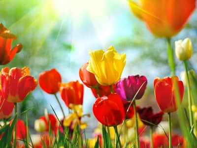 Inspirational Quotes that Celebrate Springtime - Beliefnet