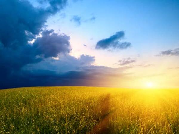 sunrise over wheat fields