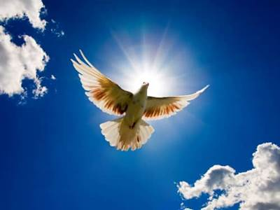 flying dove blocking out the sun