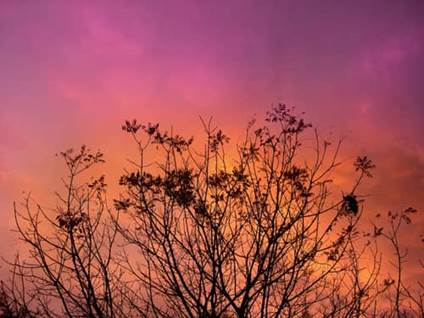 bramble silhouetted against pink sky