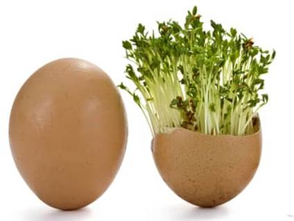 Egg Shell Potted Plant