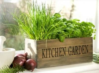 Growing Our Own Herbs Can Help Nourish Lives And Us Be Greener Here S A Quick Easy How To On Your Herb Garden