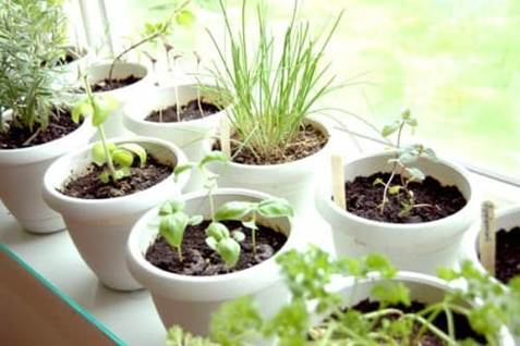 Herb Garden Cover Photo