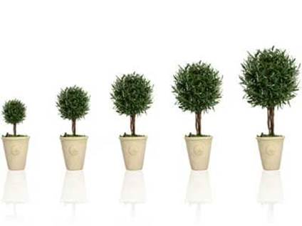 Potted plants growing in size