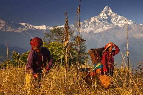 Annapurna Mountain Harvest
