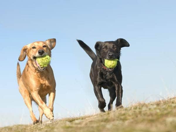 10 Ways to Keep Your Dog Healthy