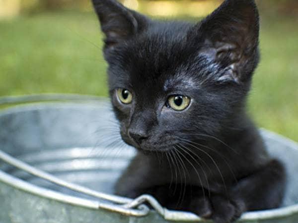 Black kitten sitting in a silver bucket