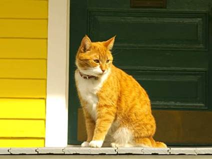 Yellow cat waiting on a porch yellow house