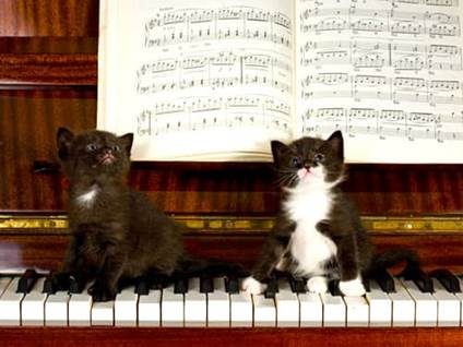 Black and white kittens sitting on a piano