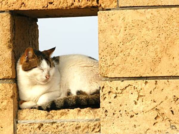 White and brown cat sleeping on a brick wall