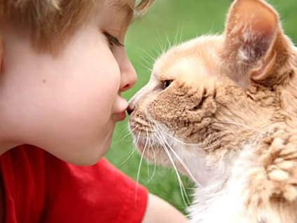 Little boy kissing a tan and white cat