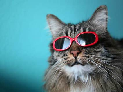 Gray cat wearing red sunglasses