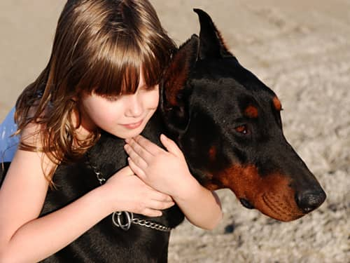 Little girl hugging a Doberman