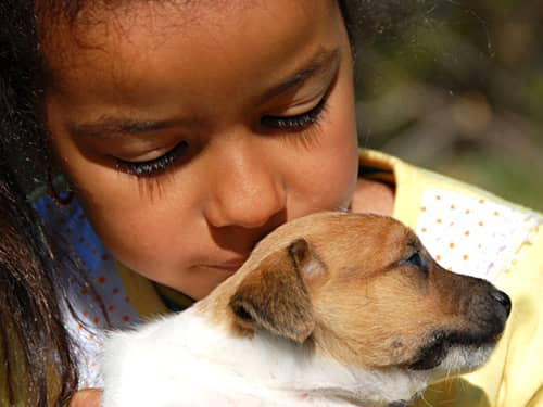 Little girl hugging Jack Russell puppy