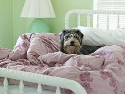 5 Ways To Get A Good Night S Sleep Let Pets Sleep In