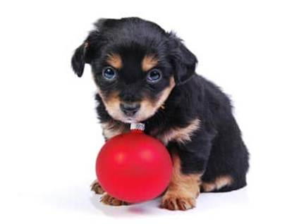 Puppy with a red ornament