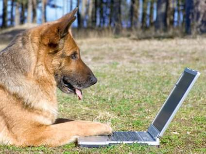Pet Prayers: German shepherd on a laptop