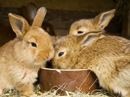 Pet Prayers: Bunnies eating from a bowl