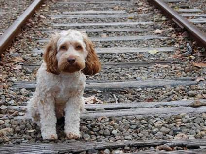 Pet Prayers: Stray dog staring from train tracks