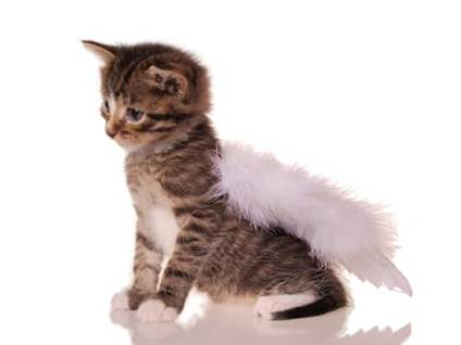 Pet Prayers: Kitten with angel wings