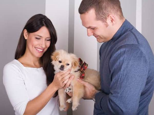 Pet Prayers: Couple holding a puppy