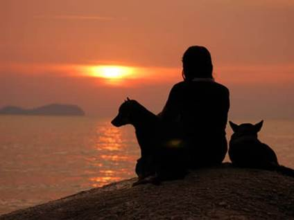 Woman with dogs looking at sunset