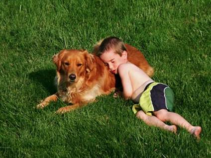 Little boy sleeping on golden retriever