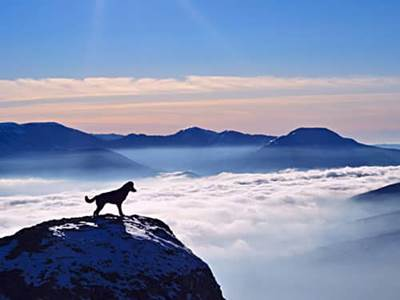 Dog on a mountain