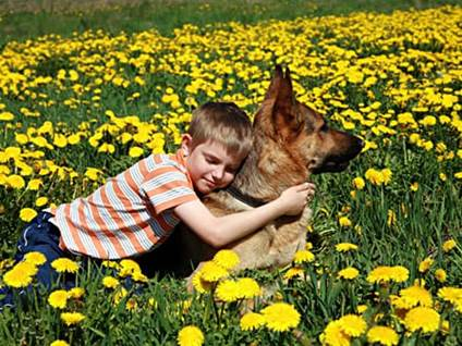 Young boy hugging German shepherd