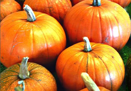 stuffed pumpkins, stuffed pumpkin recipe, stuffed pumpkin recipes