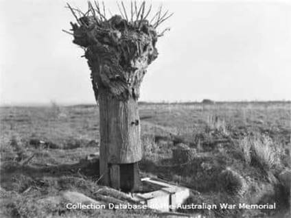 Dummy Tree Messines