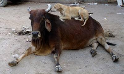 friendship, dog