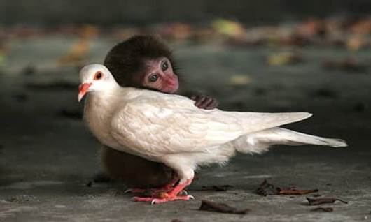 bird, monkey